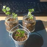 雨なので植物観察