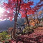 今年最後の紅葉狩りに檜原村へ