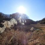 生田緑地と寺家ふるさと村ポタ。