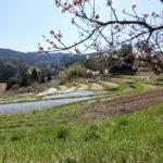 千葉のダムとトンネルと桜と千枚田(東京湾一周の旅)