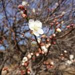 越生の梅と桂木観音の坂