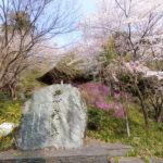 慈光寺の桜、八徳のさくら その1慈光寺の桜編