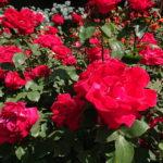 春の花満喫ポタライド